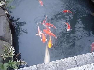 本堂横の池